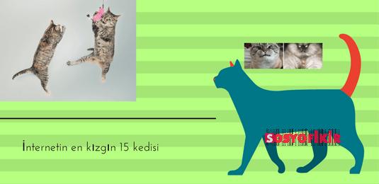 İnternetin en kızgın 15 kedisi