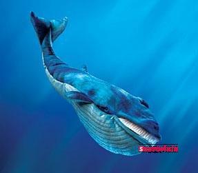 mavi balina agC4B1r hayvan