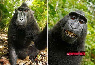funny animal selfies 108 587e1a088c779  605