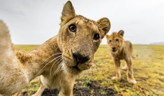 funny animal selfies 117 587e2542b0585  605