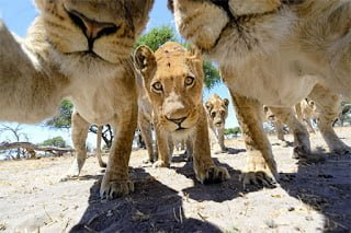 funny animal selfies 587df8d93d11e  605