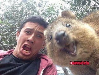 funny animal selfies 65 587e1e9b9d885  605