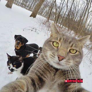funny animal selfies 68 587e26ed2ad50  605