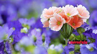 Çiçek Siparişi Verme