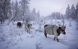 coldest village oymyakon russia amos chaple 16