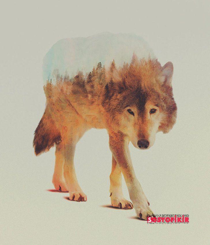 sanatsal hayvan fotoğrafları galerisi (44)